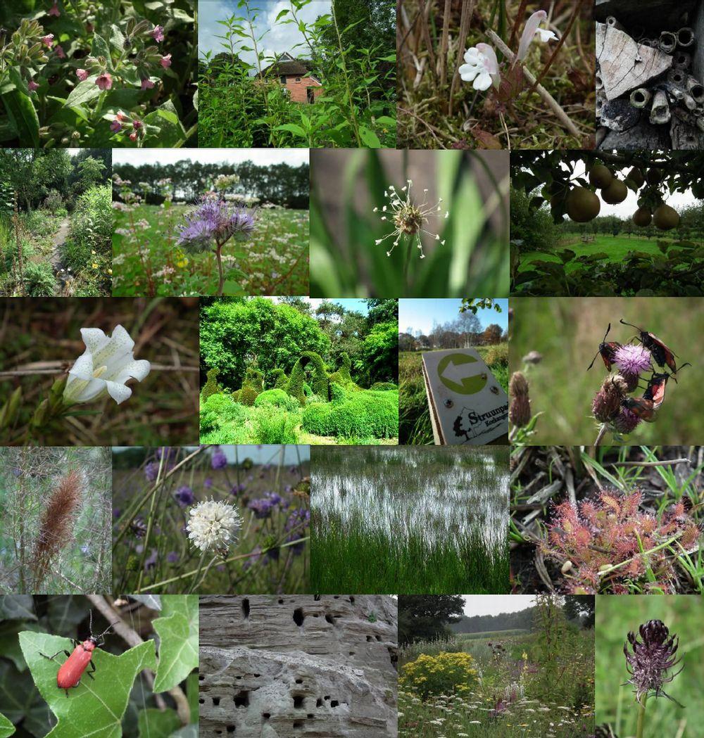 Landschap, tuinen, planten en dieren in beeld